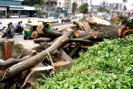 Save Bangalore Trees