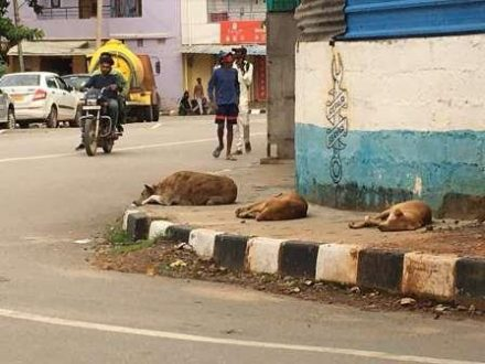 Govt orders probe into Animal shelter